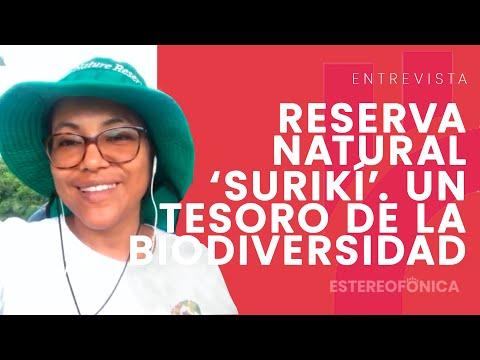 Descubre la Reserva Natural Surikí, un tesoro de la biodiversidad