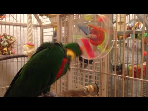 Foraging Wheel for Parrots