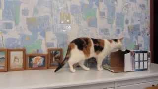 Cat pulls a box.Кошка дерет коробку.