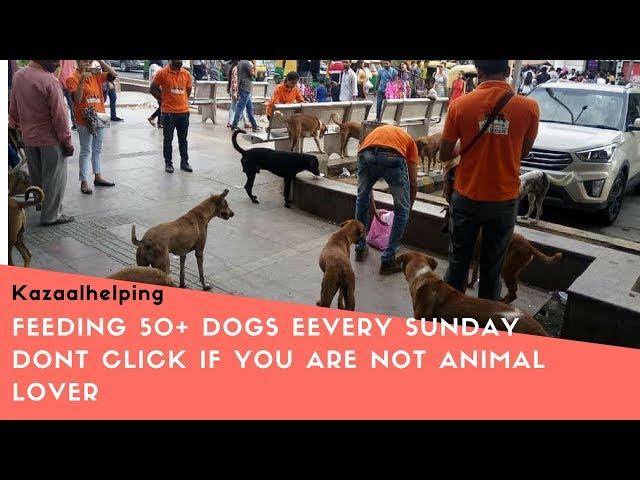 For Animal Lovers | Help For Stray Dogs | Feeding For Street Dogs In Delhi |Love Dogs