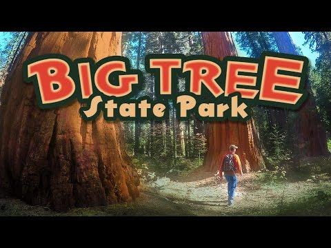 Calaveras BIG TREES State Park!! California Tour: