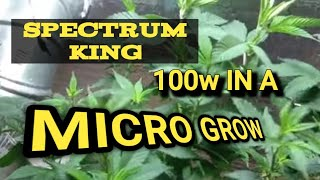 Spectrum King 100w Closet Case in my Micro Grow Box
