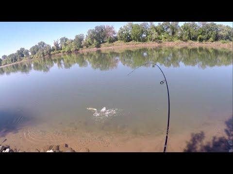 SHAD FISHING PANDEMIC SACRAMENTO RIVER 4-28-2020