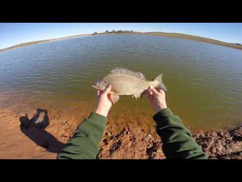 Fishing Bundaleer Reservoir - Silver Perch On Bait