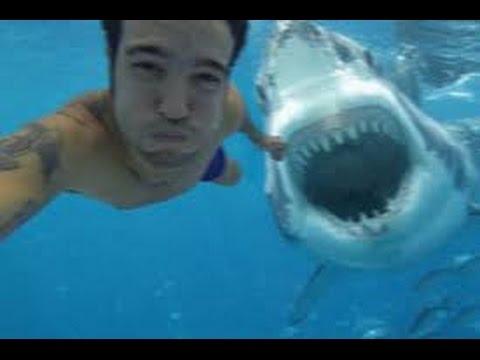 Une attaque de requin filmée près de la baie de SanFrancisco