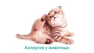 Аллергия у животных. Ветеринарная клиника БИО-ВЕТ.