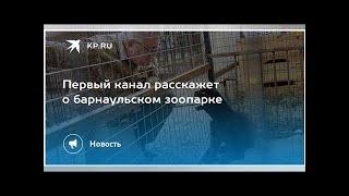 Первый канал расскажет о барнаульском зоопарке