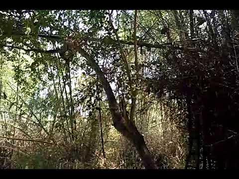 Berburu kakatua