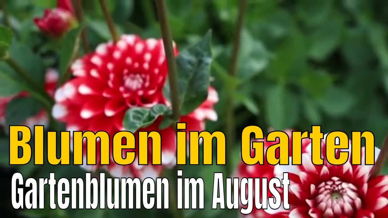 Blumen garten  Wunderschöne Blumen im Garten - YouTube