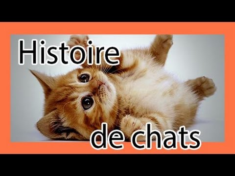 des chats trop dr les funny cats histoire de chats rigolos amusants marrants youtube. Black Bedroom Furniture Sets. Home Design Ideas