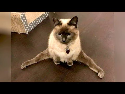 Funny CATS & DOGS that will KILL YOUR STRESS! LAUGH NOW!