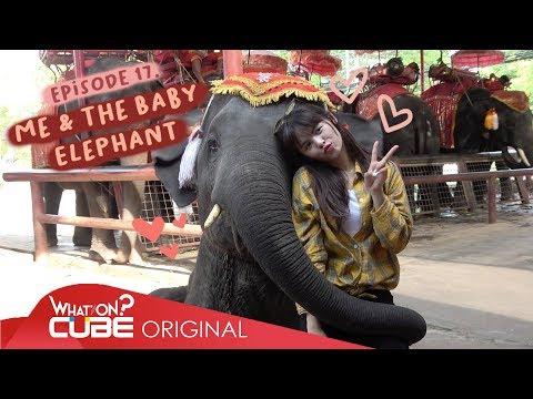 """손(SORN) - """"PRODUSORN Diary"""" 015 :  ME & THE BABY ELEPHANT"""