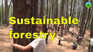 Sustainable forestry and woodland management practices - sustainable agroforestry in uk agriculture