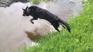 Приколы.  Собака плавает.
