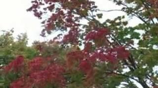 Autumn   Fall in Door County - Door County Wi Seasons