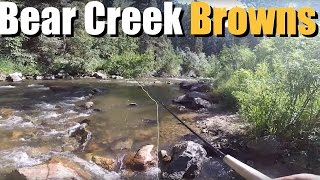 Fly Fishing Colorado. Catching Brown Trout on Bear Creek in Colorado!