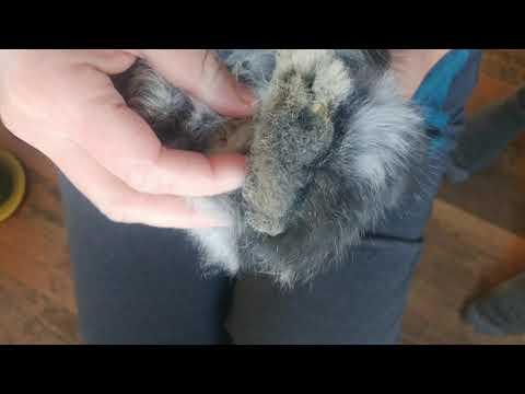 Bunny bottom