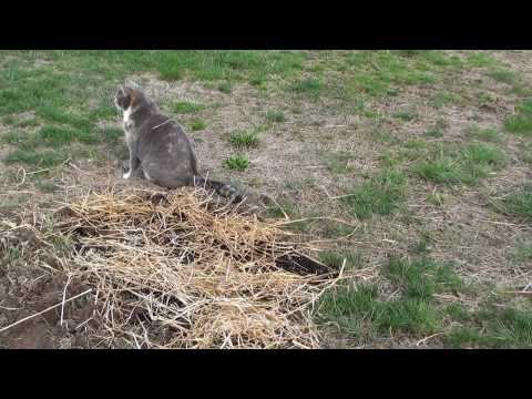 Lawn Repair - How to re-seed grass