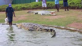gros crocodile Papouasie-Nouvelle-Guinée sur France1