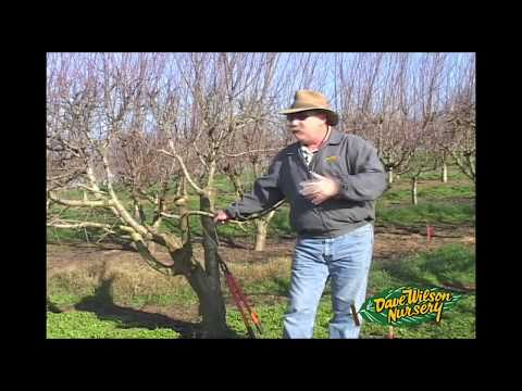 Plant a Fruit Salad: Four Different Fruits Growing on the