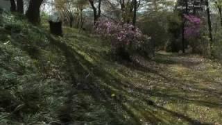 多治見市 「虎渓公園・永保寺」 ~桜~