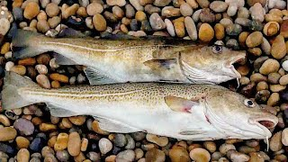 МОРСКАЯ РЫБАЛКА 2021г БАРЕНЦЕВО МОРЕ FISHING IN THE BARENTS SEA NEW SEASON
