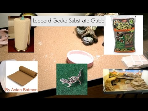 What substrate to use for your leopard gecko?