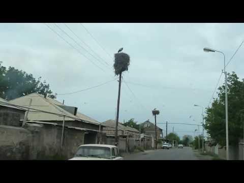 Армения село Аргаванд. Вот так спокойно аисты здесь живут