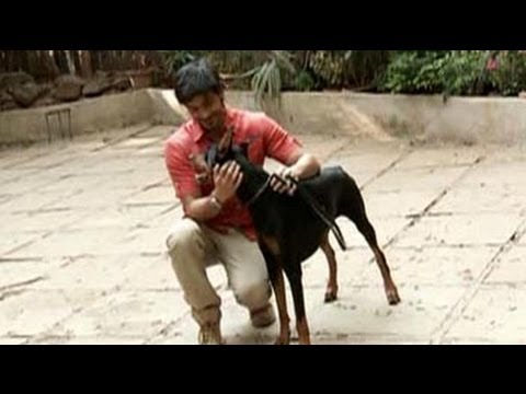 Don't Be Scared Of Dobermans | Heavy Petting