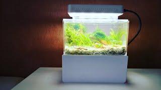 Mini Complete Aquarium - My Smallest Aquascape!