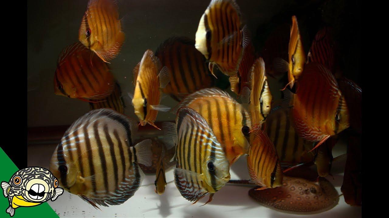 wild-fish-unboxing-update-deans-fish-room-update