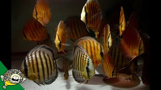 Wild Fish Unboxing - Update. Deans Fish Room Update