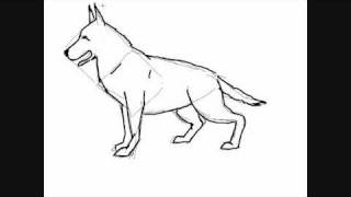 How to draw a dog breed  german shepherd - Things to Draw