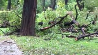 Ураган в Одессе 12.10.2016 на примере Алексеевского сквера