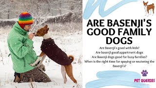 Are basenjis good family dogs? | When is the right time for spaying or neutering the Basenji's? |