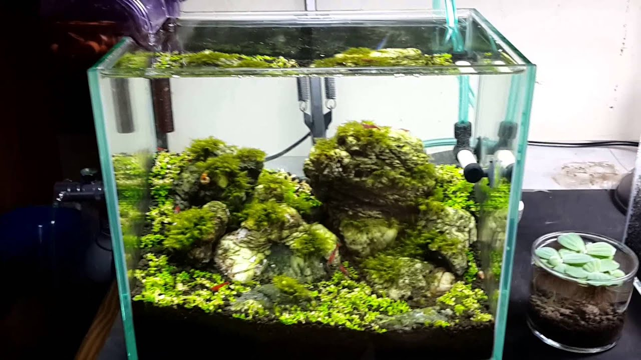 My Nano Shrimp Aquascape Tank - YouTube