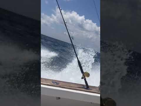 Offshore Fishing On A Buddy Harris  Sportfish🐠🐠🤙🏻