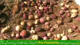 Virus Free Potato Plant Production
