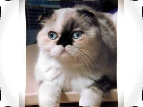 FoldEx Cat shorthair and longhair coat cats