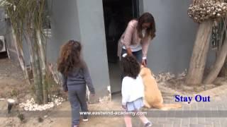 Labrador Dog Training Centers In Egypt