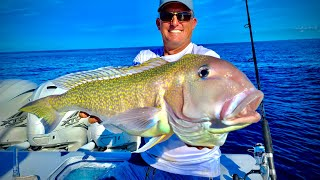 Massive GOLDEN Tile Fish, Mutton and Cobia!! {Catch Clean Cook} 44 Contender - Quad 425's!!!