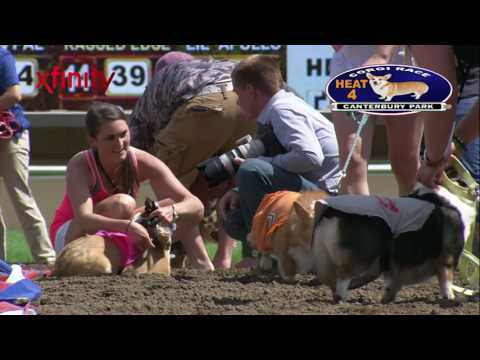 Canterbury Park Corgi Dog Races 7-29-17