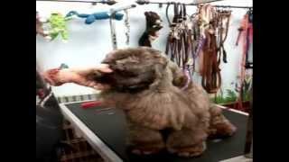 Pet Grooming - Grooming A Cocker Spaniel