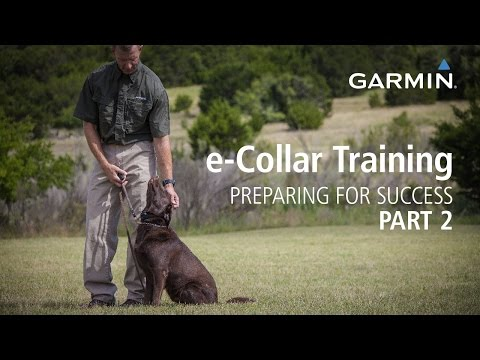 e-collar-training:-preparing-for-success,-part-2