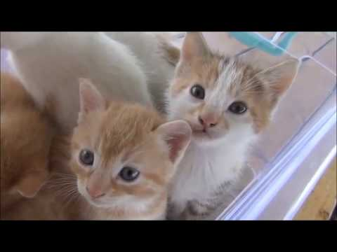 Little Cute Kittens Meowing Compilation