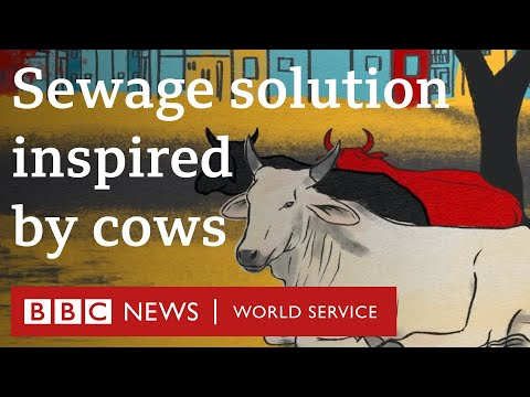 The zero-power sewage plant inspired by cows