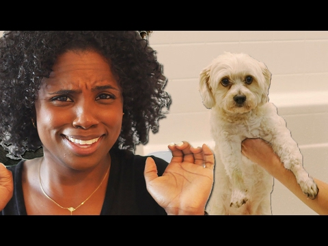 Thumbnail: Non-Dog Owners Try Giving A Dog A Bath