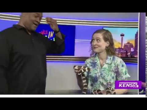 Slytherin into the News on A Great Day SA on KENS 5 with a California King Snake! - Part 1