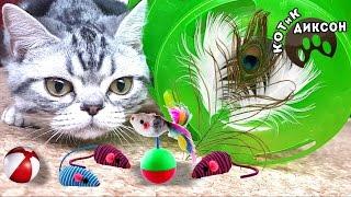 🐾😺  Любимые игрушки котика Диксона. Смешное видео про кошек