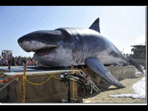 Top 10 Biggest Freshwater Fish in The World - PEI Magazine |Worlds Largest Bull Shark